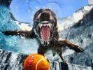 chien saute piscine