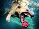 chien plonge eau balle
