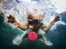 chien eau piscine balle