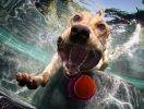 chien gobe balle piscine