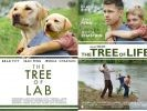 film chien brad pitt tree of life