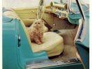 pub chat corvette voiture