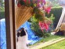 chat joue avec fleurs