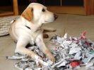 chien déchire journal
