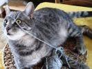 chat joue avec fil