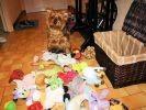 chien jouets panier
