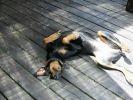 chien sieste terrasse soleil