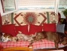 chiens sieste canapé