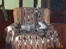chien drole sieste canapé