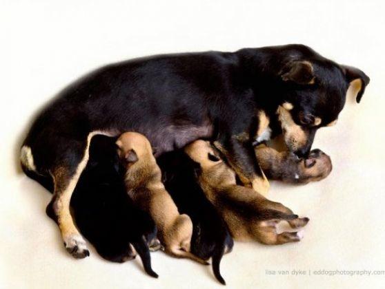 avec le reste de la famille le plus petit chien du monde se bat pour la vie photos page 5. Black Bedroom Furniture Sets. Home Design Ideas