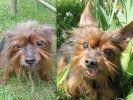 chien york abandonné adopté