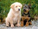 chiens copains