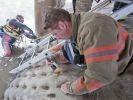 pompiers sauvetage chien