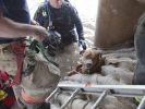 sauvetage chien voit maitre