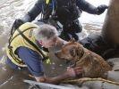 maitre chien bras sauvetage