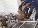 chien sauvé pompiers