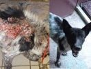 chien maladie de la peau