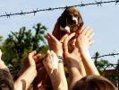 race chien beagle experimentation