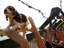 chien experimentation elevage