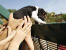 activistes sauvetage chiens
