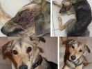 chien blessure sauvetage