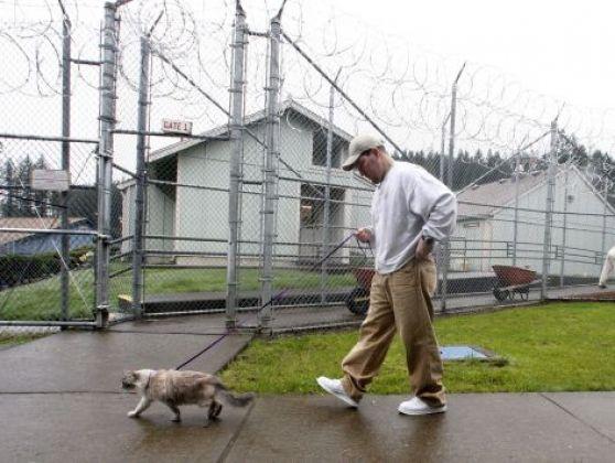prisonnier promene chat