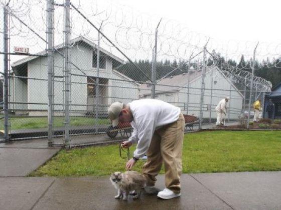 prisonnier chat