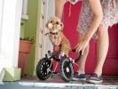 chien amputé chariot roues