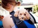 chien amputé sac à dos