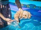 chien amputé piscine