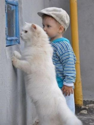 chat enfant fenetre