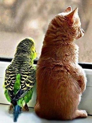 perruche chaton fenetre