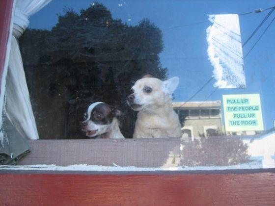deux chiens espionnent