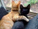 chat roux chat noir