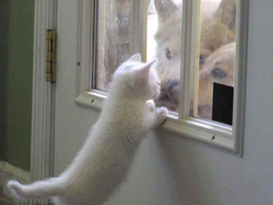 chaton deux chiens