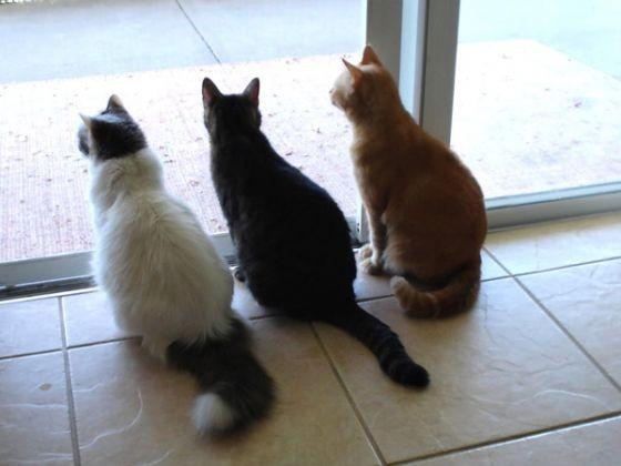 trois chats fenetre