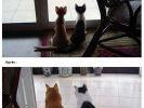 deux chats amis avant apres