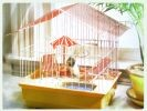 hamster cage luxe piscine