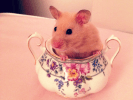 hamster sucriere