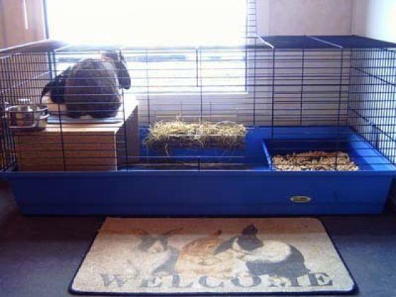 cage pour lapins la cage du lapin de l 39 achat jusqu 39 l. Black Bedroom Furniture Sets. Home Design Ideas