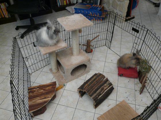 parc pour lapins