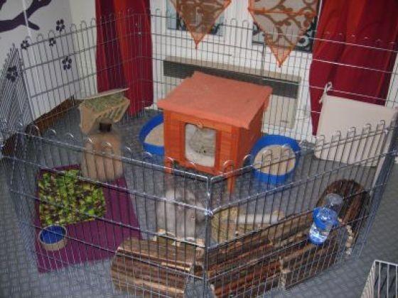 parc pour lapins la cage du lapin de l 39 achat jusqu 39 l 39 am nagement page 6 wamiz. Black Bedroom Furniture Sets. Home Design Ideas
