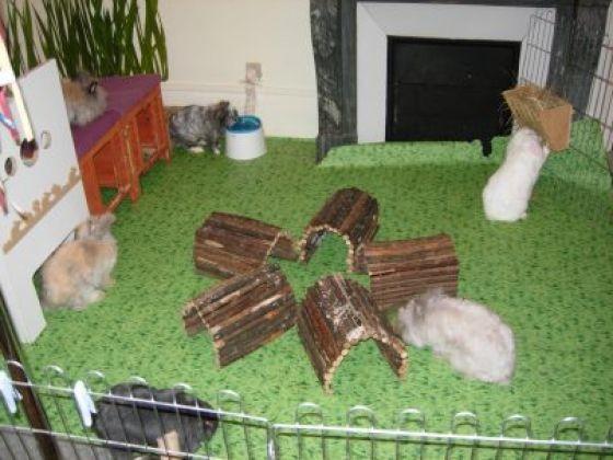 Grand parc int rieur pour lapins la cage du lapin de l for Parc d interieur
