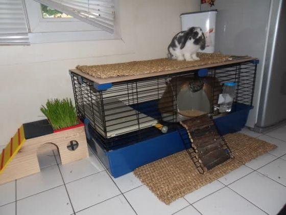 cage pour lapin la cage du lapin de l 39 achat jusqu 39 l. Black Bedroom Furniture Sets. Home Design Ideas