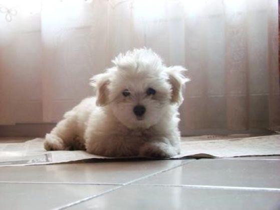 Etoilou b 233 b 233 chien tout blanc les plus beaux b 233 b 233 s animaux de