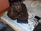 chat noir bêtise