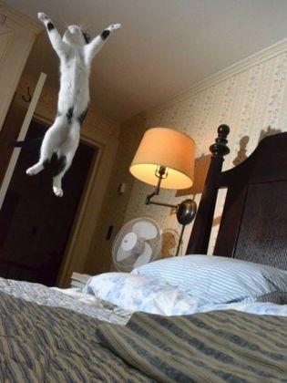 chat content saute
