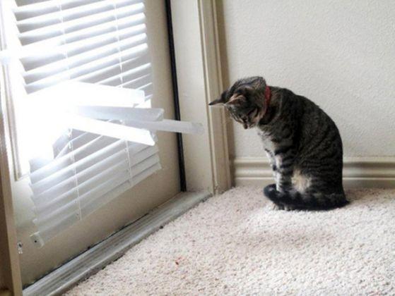 chat inquiet retour maitre