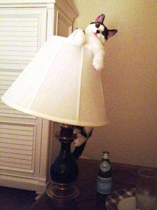 chat dans lampe de chevet