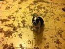 chien betise nourriture